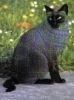 The Talking Cat? - last post by clinsey